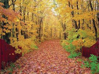 A lehulló falevelek természetes tápanyag utánpótlást jelentenek