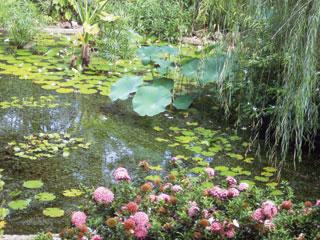 A víz alatt élő növények gondoskodnak a tó oxigénellátásáról