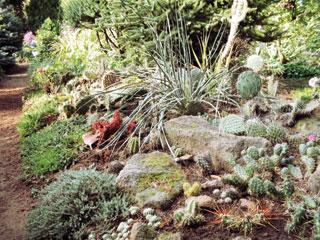 kaktuszok_100_0053.jpg