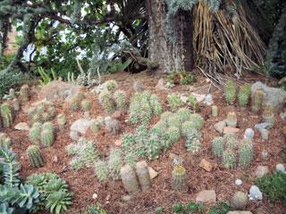 kaktuszok_100_0054.jpg