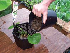 Tavaszi tennivalók és a cserepes növények védelme