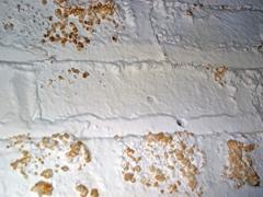 Hatékony megoldások a falak penészedésének megszüntetésére és a faanyagok kezelésére