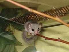 Ultrahangos készülékek állatok ellen