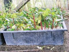 Nyári növényszaporítási módok