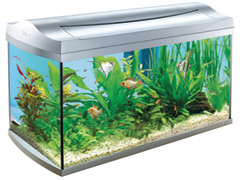 Akvárium választás