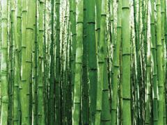 Bútorok, tárgyak bambuszból
