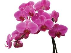 Orchideák táplálása