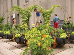 Indul a balkon-növények szezonja