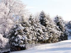 Hónapról-hónapra a kertben - December-január