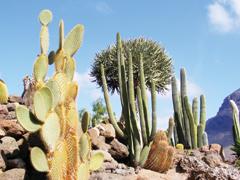 Kaktuszok a lakásban