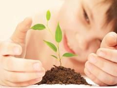Tél végi növényszaporítás