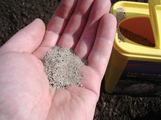 A homok jól fertőtleníthető, így optimális vetőközeg