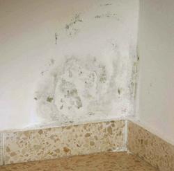 A falon kicsapódó pára hatására gyorsan penészes foltok jelennek meg