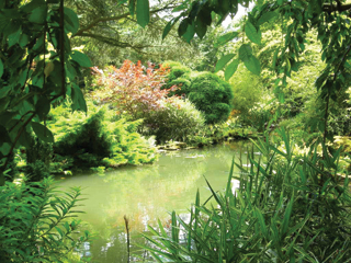 A víz zöldes színe az algák elszaporodását jelzi