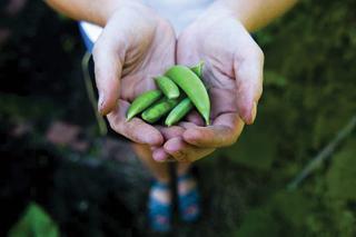 Az általunk termelt növények vegyszerterheltségének mértékében biztosak lehetünk