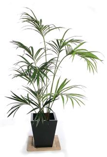 Az ideális pálmacserép magasabb és keskenyebb más virágcserepeknél