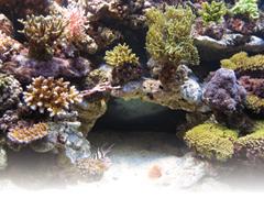 Édesvízi kontra tengeri akvárium