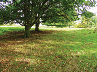 Árnyékos helyen a fű kiritkul