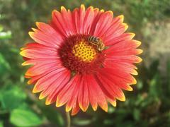 Pollenhelyzet - ÁNTSZ: az elmúlt napokban alacsony volt a pollenterhelés