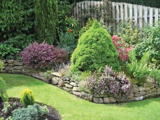 Az örökzöldek mellé ültessünk színesebb, virágzó fajokat is