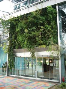 """A belsőkertbe ültetett növények egy """"ablakon"""" néznek ki az utcára"""